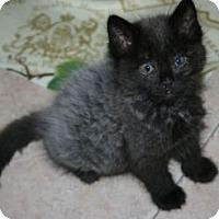 Adopt A Pet :: Remington Steele - Canoga Park, CA