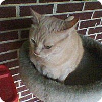Adopt A Pet :: Rosie - Easley, SC