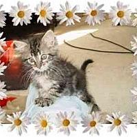 Adopt A Pet :: Sparkle - KANSAS, MO