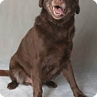 Adopt A Pet :: Scott (ADOPTED!) - Chicago, IL