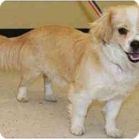 Adopt A Pet :: Hani - Gilbert, AZ