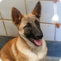 Adopt A Pet :: REN - SAN ANTONIO, TX