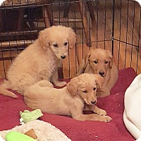 Adopt A Pet :: RED, TED AND FRED - Winnetka, CA