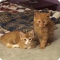 Adopt A Pet :: Bobbi (left) - Jackson, NJ