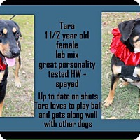 Adopt A Pet :: Tara in Ct - Manchester, CT