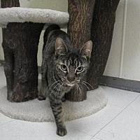 Adopt A Pet :: Seraphina - Milwaukee, WI