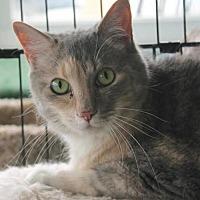 Adopt A Pet :: Opossum Fostered (Erika) - Troy, IL
