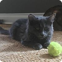 Adopt A Pet :: James bonded w Jessie - Houston, TX