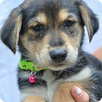 Adopt A Pet :: Kupcake - Danbury, CT