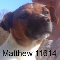 Adopt A Pet :: Matthew - Manassas, VA