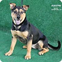 Adopt A Pet :: A093749 - Hanford, CA