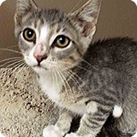 Adopt A Pet :: ADOPTED!!!   Jerry - Plainfield, IL
