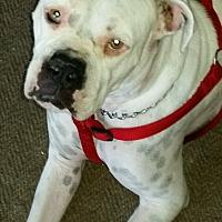 Adopt A Pet :: Zeus - Cerritos, CA