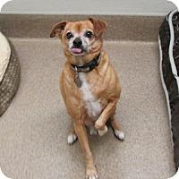 Adopt A Pet :: Jumper - Gilbert, AZ