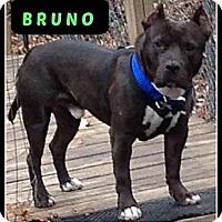 Adopt A Pet :: Bruno - MAIDEN, NC