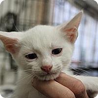 Adopt A Pet :: Marcus - Santa Monica, CA