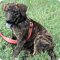 Adopt A Pet :: Esther - Brattleboro, VT