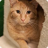 Adopt A Pet :: Rye - Byron Center, MI