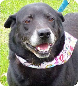 Labrador Retriever Mix Dog for adoption in Simsbury, Connecticut - Helena