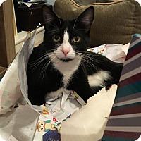 Adopt A Pet :: Damian - Valley Park, MO