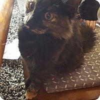 Adopt A Pet :: Chole - Clay, NY