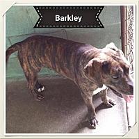 Adopt A Pet :: Barkley - Marianna, FL
