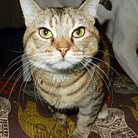 Adopt A Pet :: Season *4 paw de-claw* - O'Fallon, MO