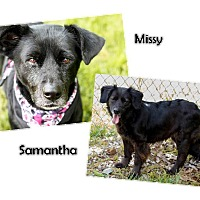 Adopt A Pet :: Missy & Samantha - Transfer, PA
