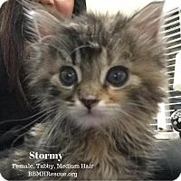 Adopt A Pet :: Stormy - Temecula, CA