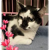 Adopt A Pet :: Oreo (Yo-yo) - Cincinnati, OH