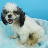 Adopt A Pet :: Claude - New Orleans, LA