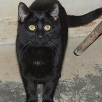 Adopt A Pet :: Boo - Westville, IN