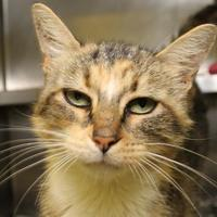 Adopt A Pet :: Emily Haines - Richmond, VA