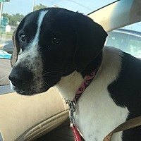 Adopt A Pet :: Berny - Columbus, OH