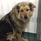 Adopt A Pet :: Danni