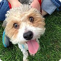 Adopt A Pet :: Charlie - San Dimas, CA
