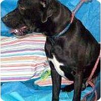 Adopt A Pet :: Zookie - Salem, OH