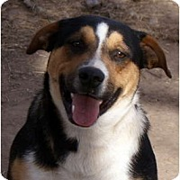 Adopt A Pet :: Maverick - Glenpool, OK