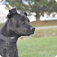 Adopt A Pet :: Paco - Tumwater, WA