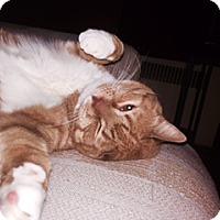 Adopt A Pet :: Jackson : Urgent - Cranford/Rartian, NJ