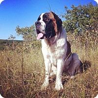 Adopt A Pet :: Clara - Saskatoon, SK