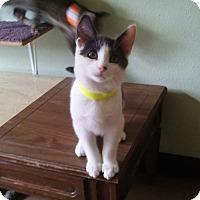 Adopt A Pet :: Newton - Montello, WI