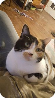 Domestic Shorthair Cat for adoption in Wilmore, Kentucky - Ma Bell