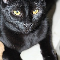Adopt A Pet :: Selena - New Castle, DE