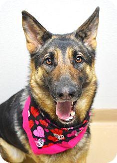 German Shepherd Dog Dog for adoption in Dublin, California - Reagan