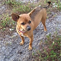 Adopt A Pet :: Red - LaBelle, FL
