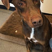 Adopt A Pet :: Marco - Van Nuys, CA