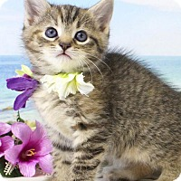 Adopt A Pet :: Saga - Harrisonburg, VA