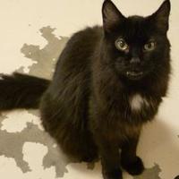 Adopt A Pet :: Spookie - Westville, IN