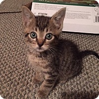 Adopt A Pet :: Marty - Tampa, FL